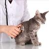 Ветеринарные клиники в Архиповке